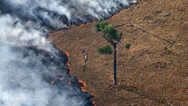 [TRIBUNE] Déforestation en Amazonie et nouvelle saison record d'incendies au Brésil : les ONG tirent la sonnette d'alarme !