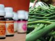Découvrez les produits issus des filières bios et équitables développées par Coeur de Forêt