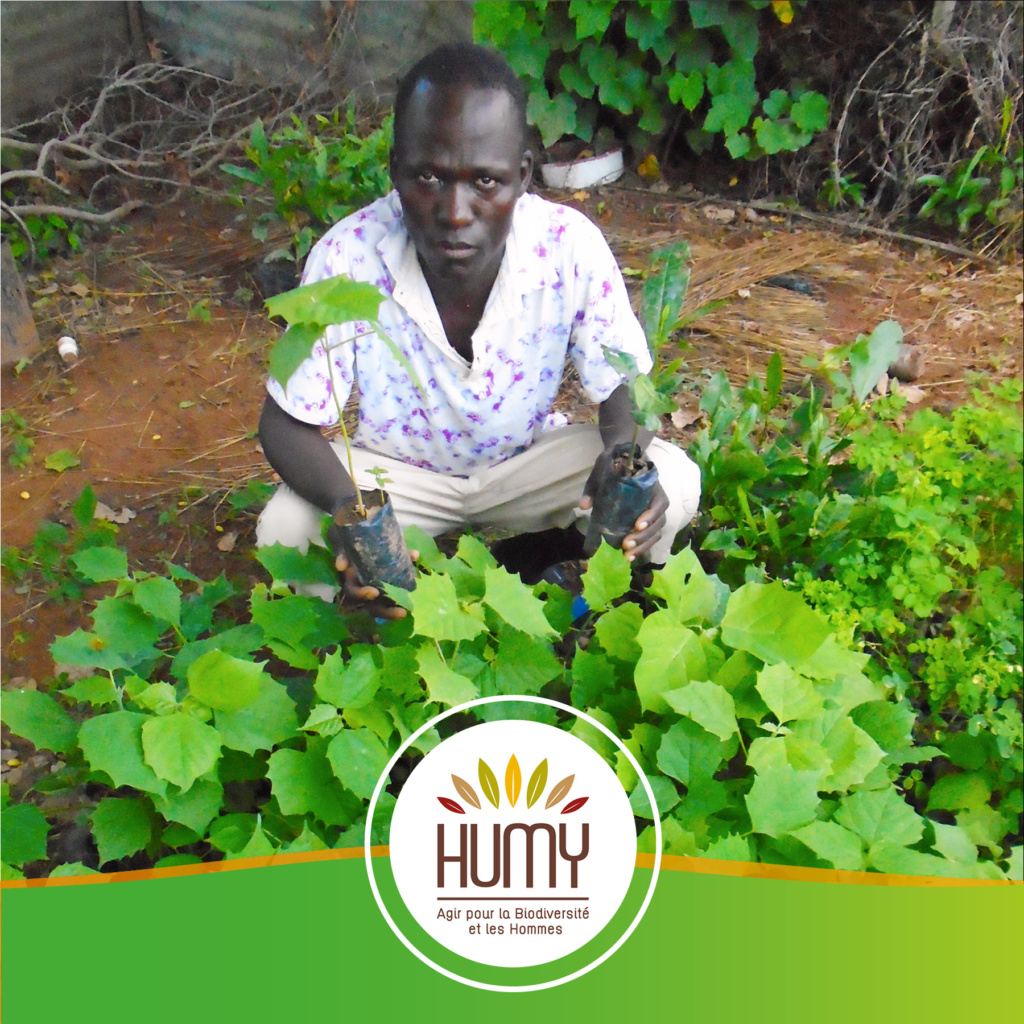 projet agroforesterie bénin Humy
