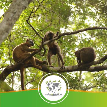 🇲🇬 Madagascar – Projet de préservation du massif forestier du Makay